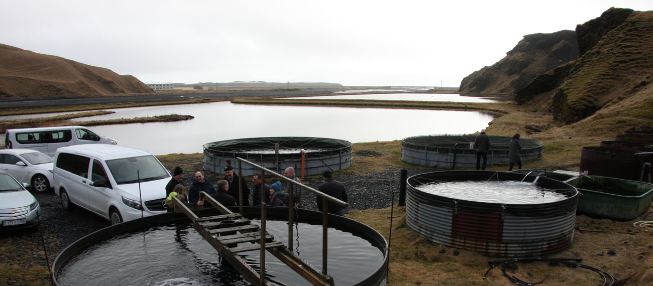 InnoAquaTech study visit to Iceland – the island of volcano, rain, fish and microalgae