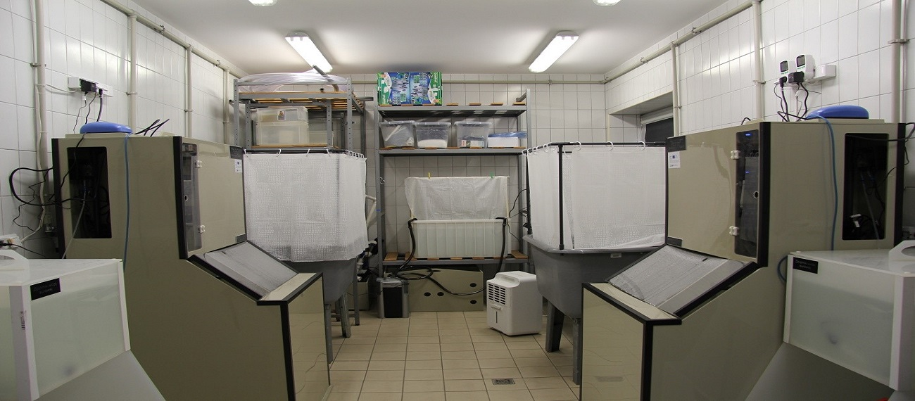 RAS 500 – a small scale laboratory system for shrimp cultivation at the Institute of Oceanography, University of Gdansk